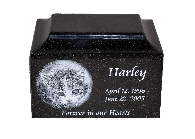 Cat's ashes