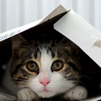 Boxes and Small Spaces are Kitty Magnets: Why the Attraction?