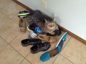Cats love shoes
