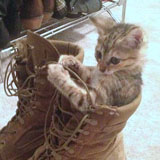 Cats loves shoes