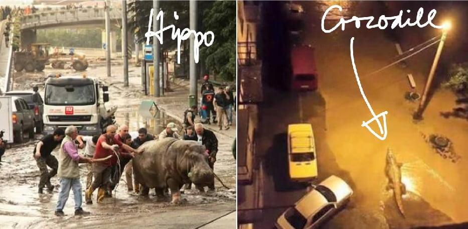Crocodile and hippo in Tbilisi