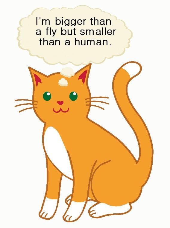 Domestic cat size