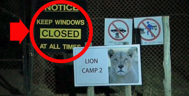 Lion kills woman in car at safari park