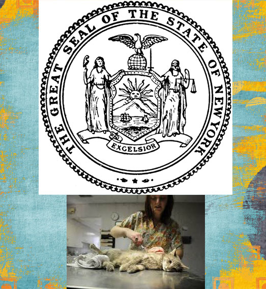 New York state law concerning feral cats