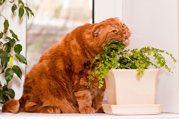 Cat Food Fussy Eaters