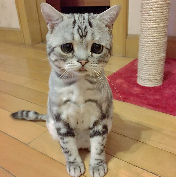 Sad Cat Luhu