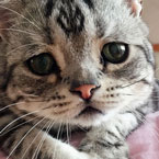 Saddest Cat