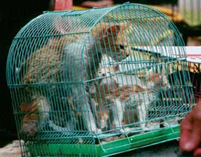 South Korea cat meat