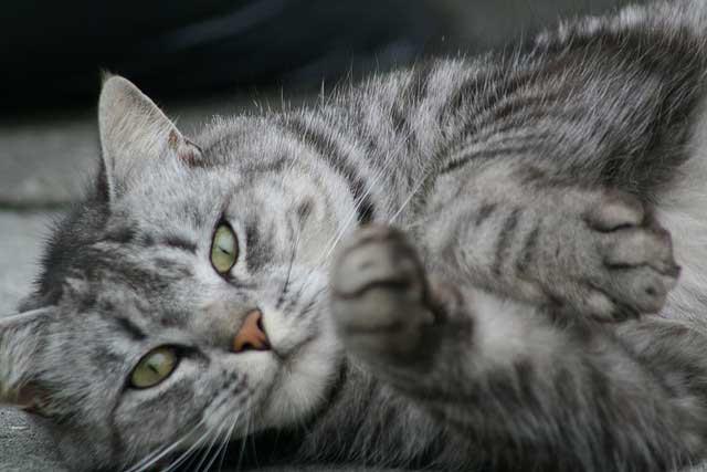 Cat telepathy