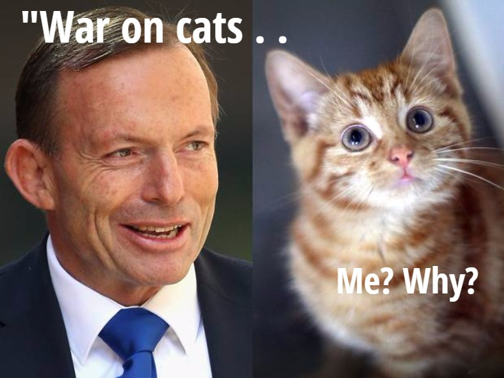 Australian Premier wants to kill feral cats en masse