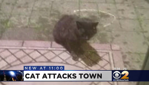 aggressive black cat frightens people
