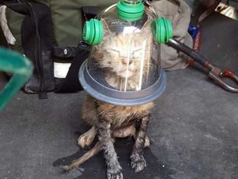 Tailor-made cat and dog oxygen mask revives cat after house fire