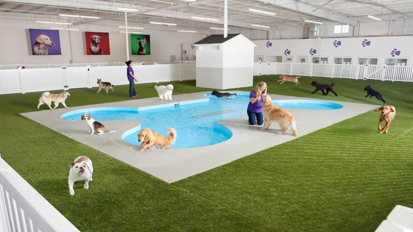 Ark at JFK dog facility