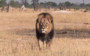 Cecil the lion