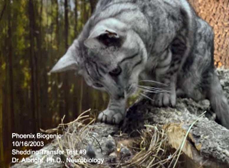 Cat feeds birds