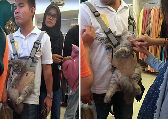 Man carries cat in baby carrier