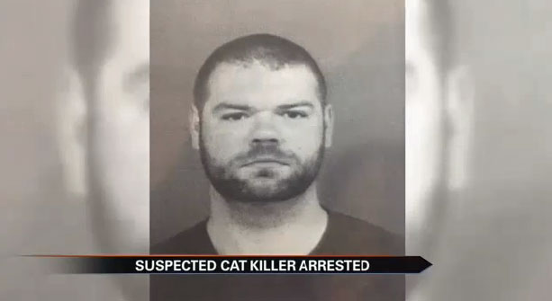 Cat Killer Howard