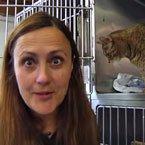 Cat welfare manager