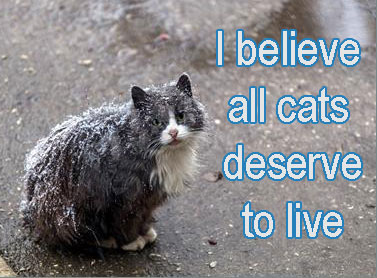 Cats deserve to live