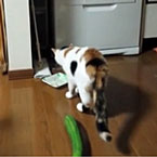 Cucumber scares cat