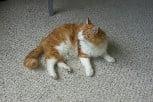 Dead cat classified as hazardous waste