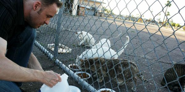 Caring for feral cats requires acceptance, compassion and compromise.