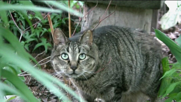 NY state about to formally fund TNR programs under new law