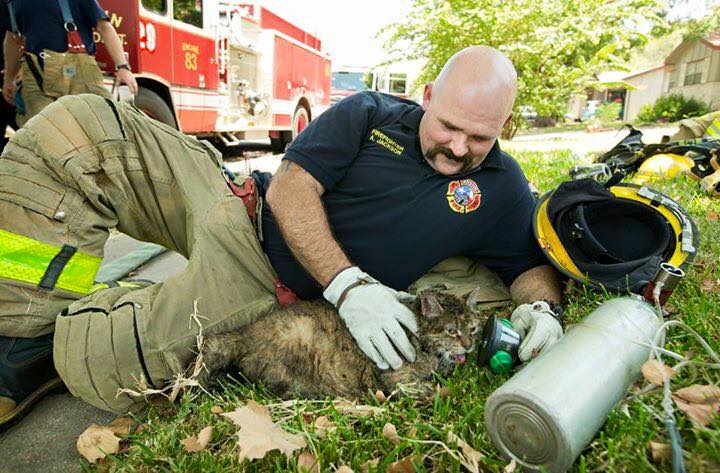 Fireman tending to cat
