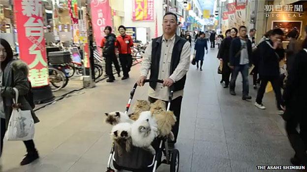 Japanese cat man