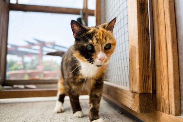 elderly rescue cat needs home