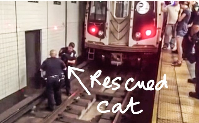 George rescued from subway rails