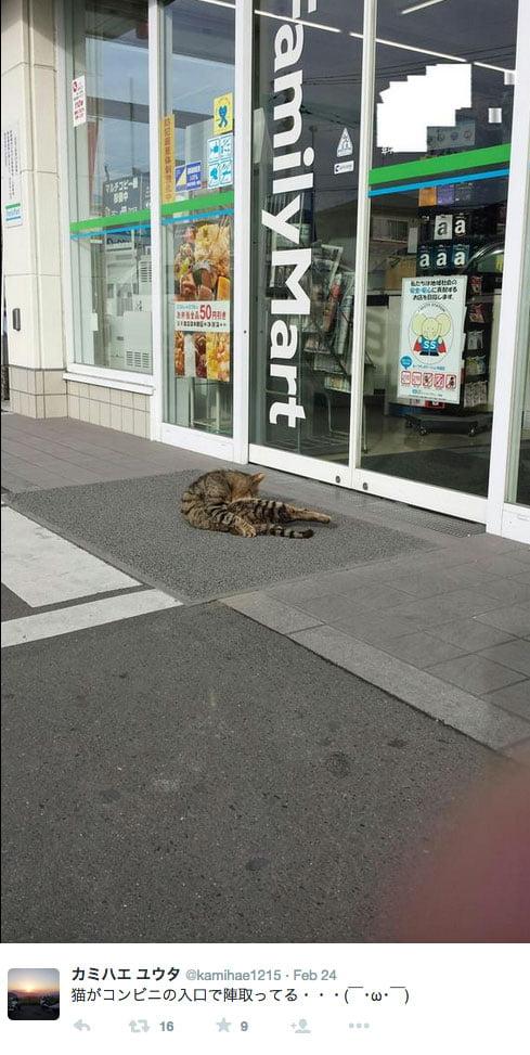 Stray cat outside Family Mart Japan