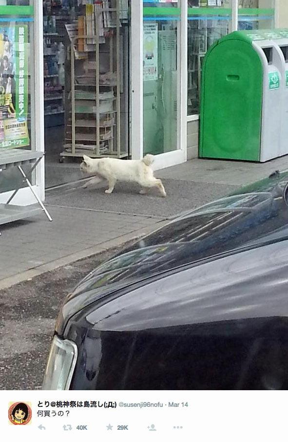 Stray cat enters family mart Japan