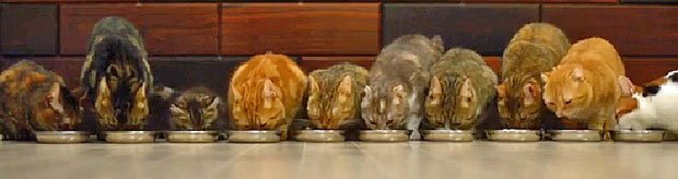Ten cats eating