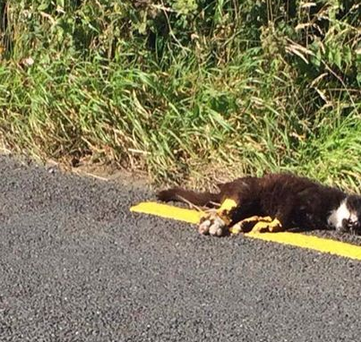 Cat with road line markings on legs