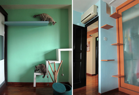 flat in Singapore good for cats