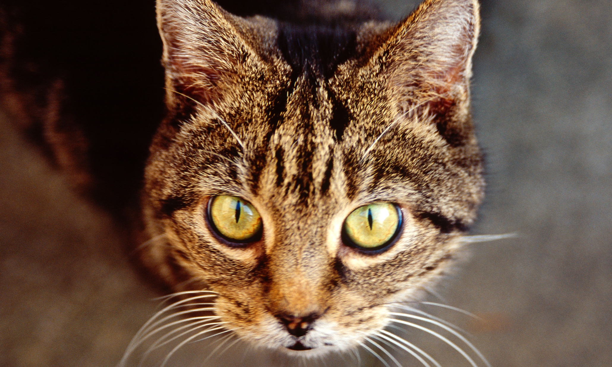 UK: Why are so many cats being poisoned?