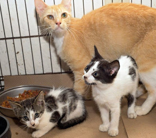 Whiteville shelter employee negligence leads to a dozen cats being killed by a dog