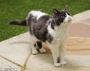 43% of Domestic Cats over 11 Years of Age Have Dementia