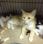 Cats killed by dog at shelter