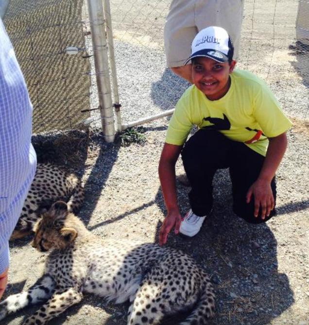 cheetah x_edited