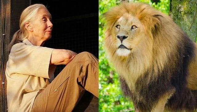 Dame Goodhall and Lion