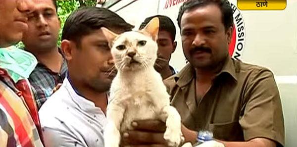 India: Rescue cat