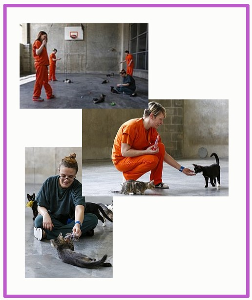 Women inmates look after rescue cats