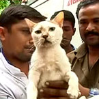 Man dies protecting his cat from collapsing building