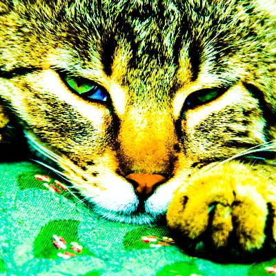 feline pain