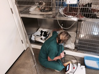 Wildfire animal patients at Middletown Animal Hospital