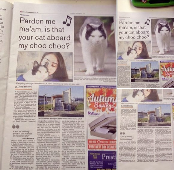 Charlie made the news photo on East Lancashire Cats page