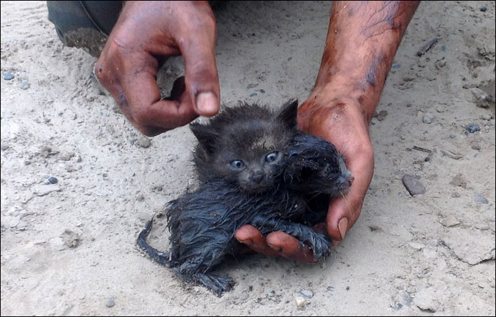 Kittens rescued from oil slick, siberia