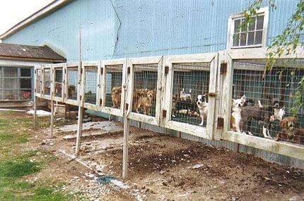 Amish puppy mill